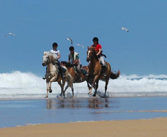 plage cheval Landes