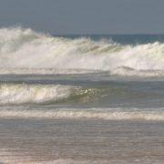 plage vagues océan cheval