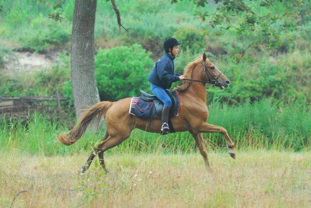 cheval forêt landes