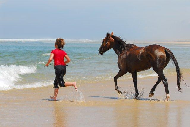 cheval plage atlantique