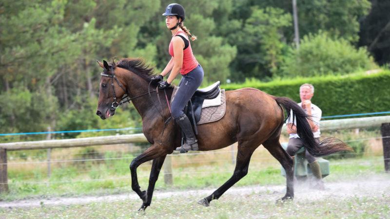 stage équitation et cours d'anglais
