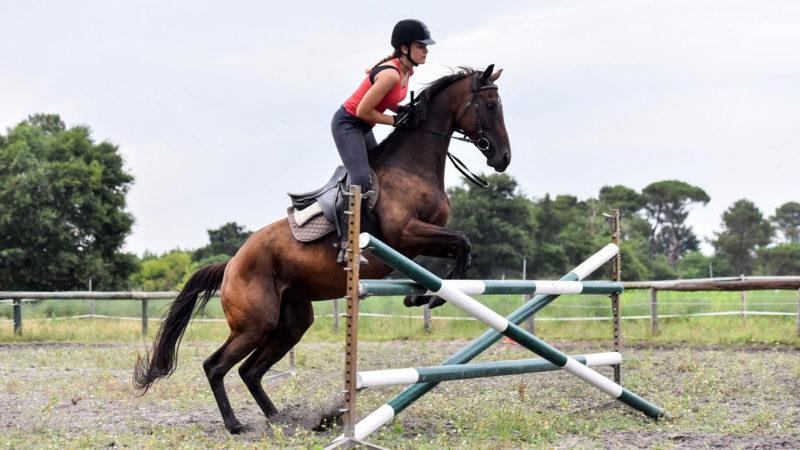 stage équitation et saut obstacle