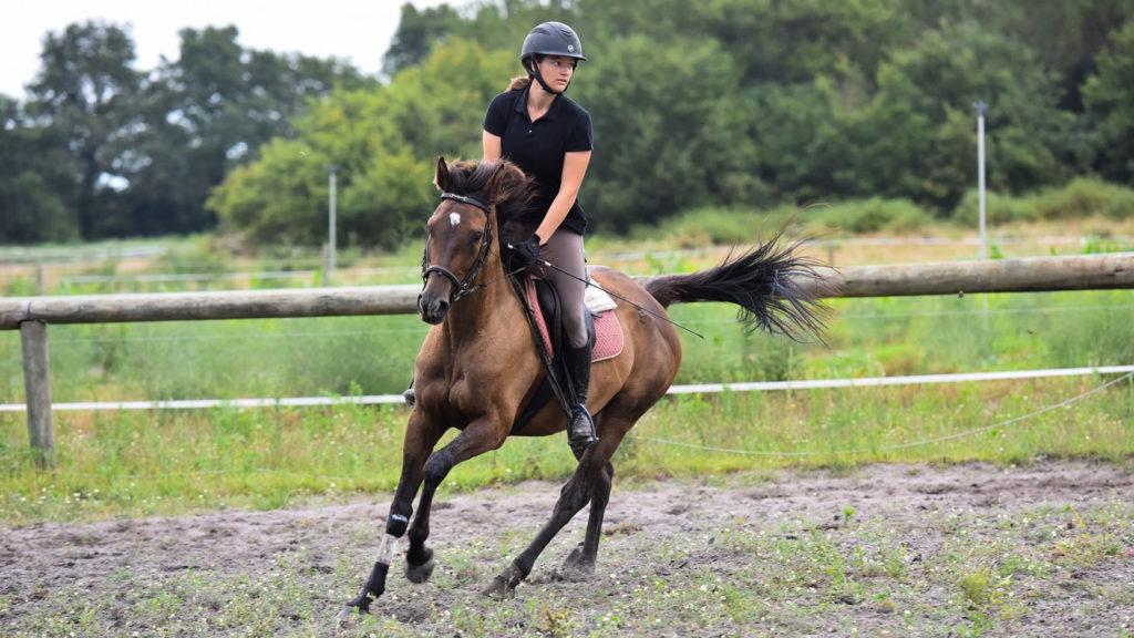 Stage linguistique Anglais Equitation en Aquitaine